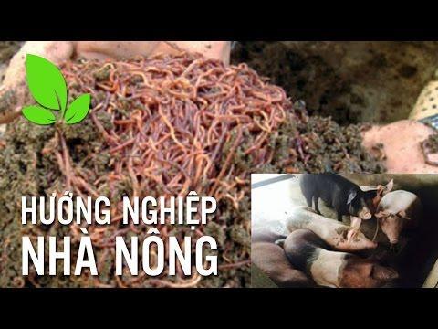 Embedded thumbnail for Sử dụng giun quế làm thức ăn cho gia súc