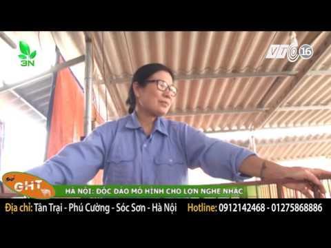 Embedded thumbnail for Nuôi lợn bằng giun quế và nghe nhạc của Trại Giun Quế GHT